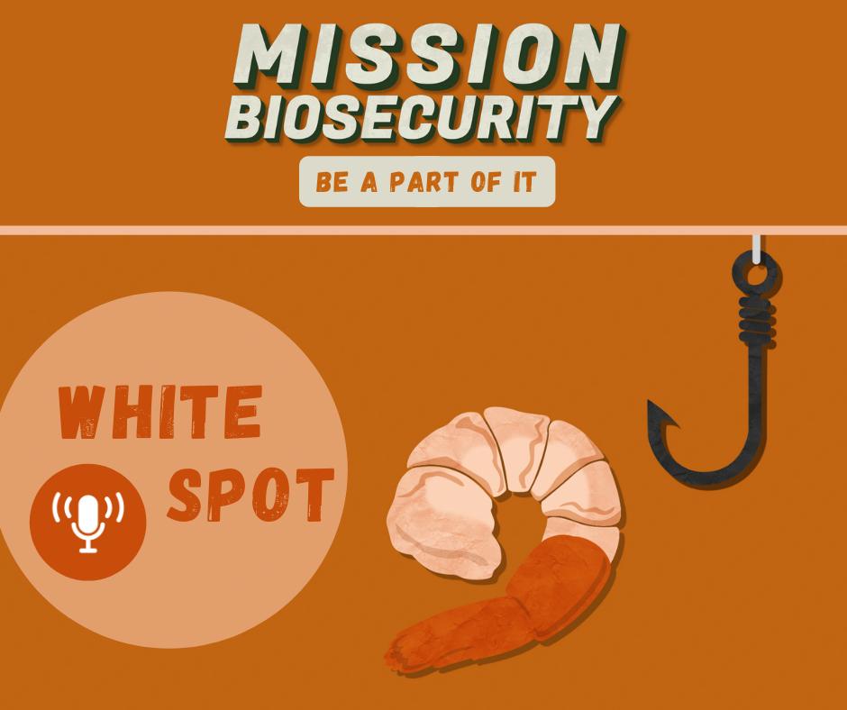 Whitespot Podcast